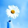 berryann: Flower