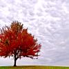 berryann: Tree