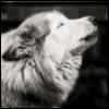 likealonewolf userpic