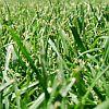green, summer
