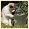 Садовница Роз: в саду