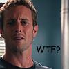 "H50 Steve ""wtf?"""