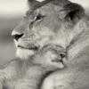 львиха
