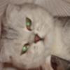 lubasha_artel userpic