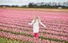 Тюльпаны поле
