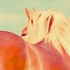 equus_o_equus