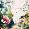 tearosegrace userpic