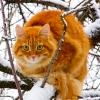 vlad_cat