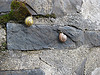 kelkyag: snails on wall
