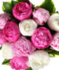 peonypearls