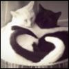 illaria_hyde userpic