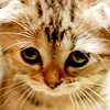 Mely: Cat