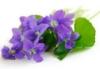 epetermann: violette