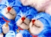 kittens, cute, doraemon