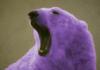 медведь фиолетовый