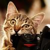 photocat
