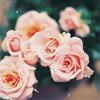 vanillarosedawn userpic