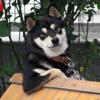 Insértese aquí una PERSONALIDAD: perro cool