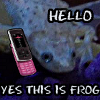 Yes this is frog