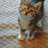 Brandi: [[Cats]] wink