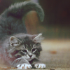 coffeeeecat userpic
