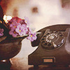 Kiwi Crocus: Zoë Lewis || Rotary phone.