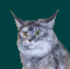 matabuba: Котег с литсом