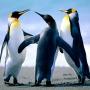 paukrus_Penguins