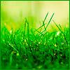 06.07.08. Grass