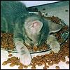 Jo Ann: Cats: Kitten asleep in food dish