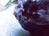 black_cat_16_happy