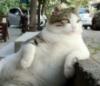 Александр: relax mew