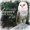 Only Forever Owl