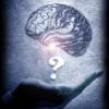 вопрос мозга