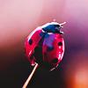 skata: ladybird