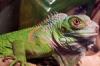 night_of_iguana userpic