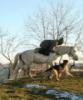 лошадь Мангуп
