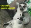 heracha userpic