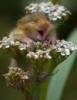 Весёлая мышка