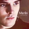 Merlin in profile