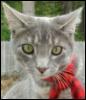 lolcat, cat, scarf