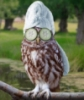 anny_owl userpic