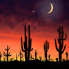 arizona_night