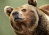 Йа медвед