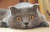 masha_marsikova userpic