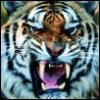 kucing_jalang userpic