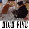Spicedogs: HighFive
