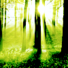 Nature || Forest of light.