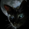 knightcat userpic