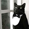 black_cat_16_007